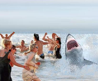 tiburon1.jpg